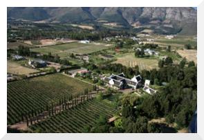 Vineyard Estate in South Africa